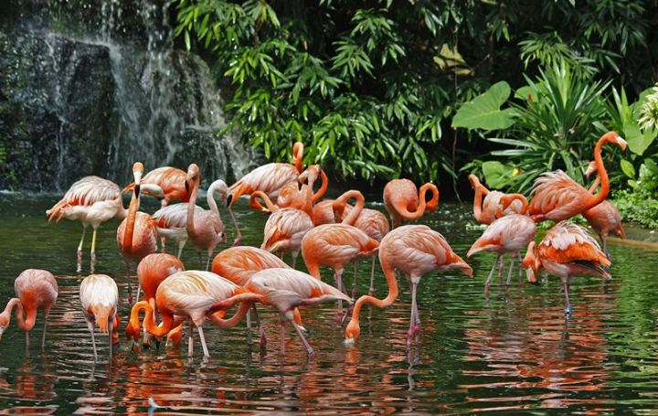 bird park sing