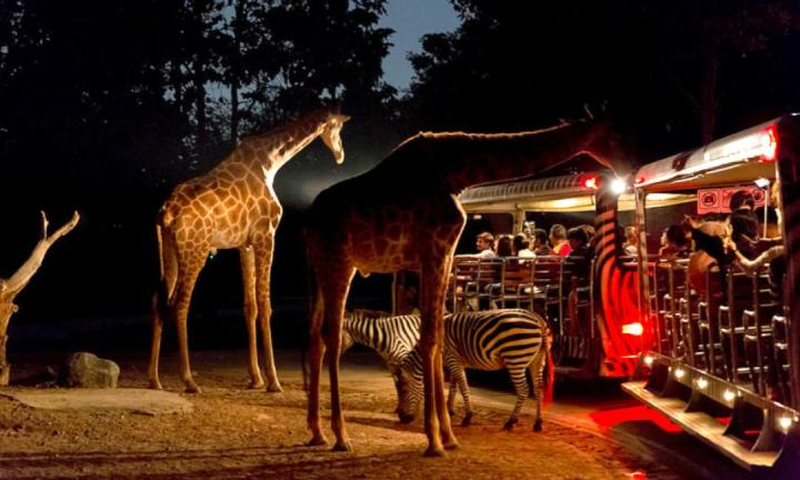 night-safari-3